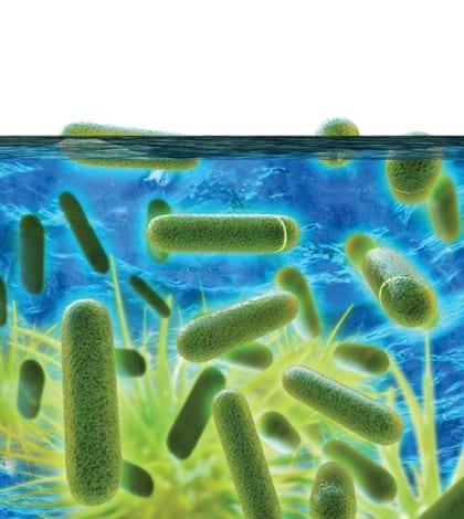 Bacteria ne Bernier_TGC_OctNov15