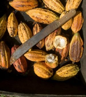 chocolate cocoa beans labor 91531920 420