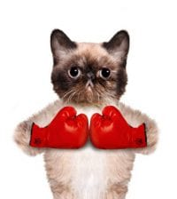 Cat with big red gloves. Isolated on white.
